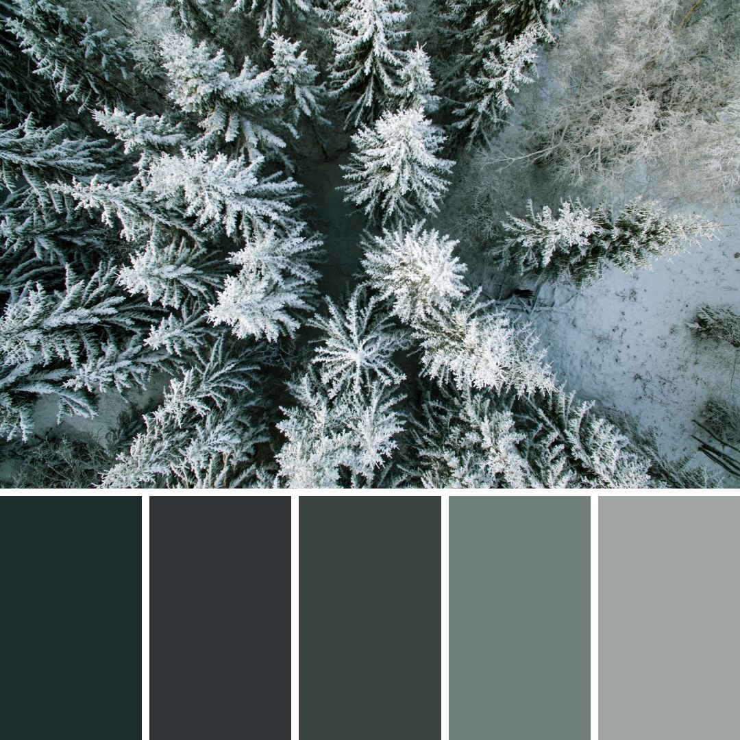 14 Winter Brand Colour Palettes for Inspiration 1