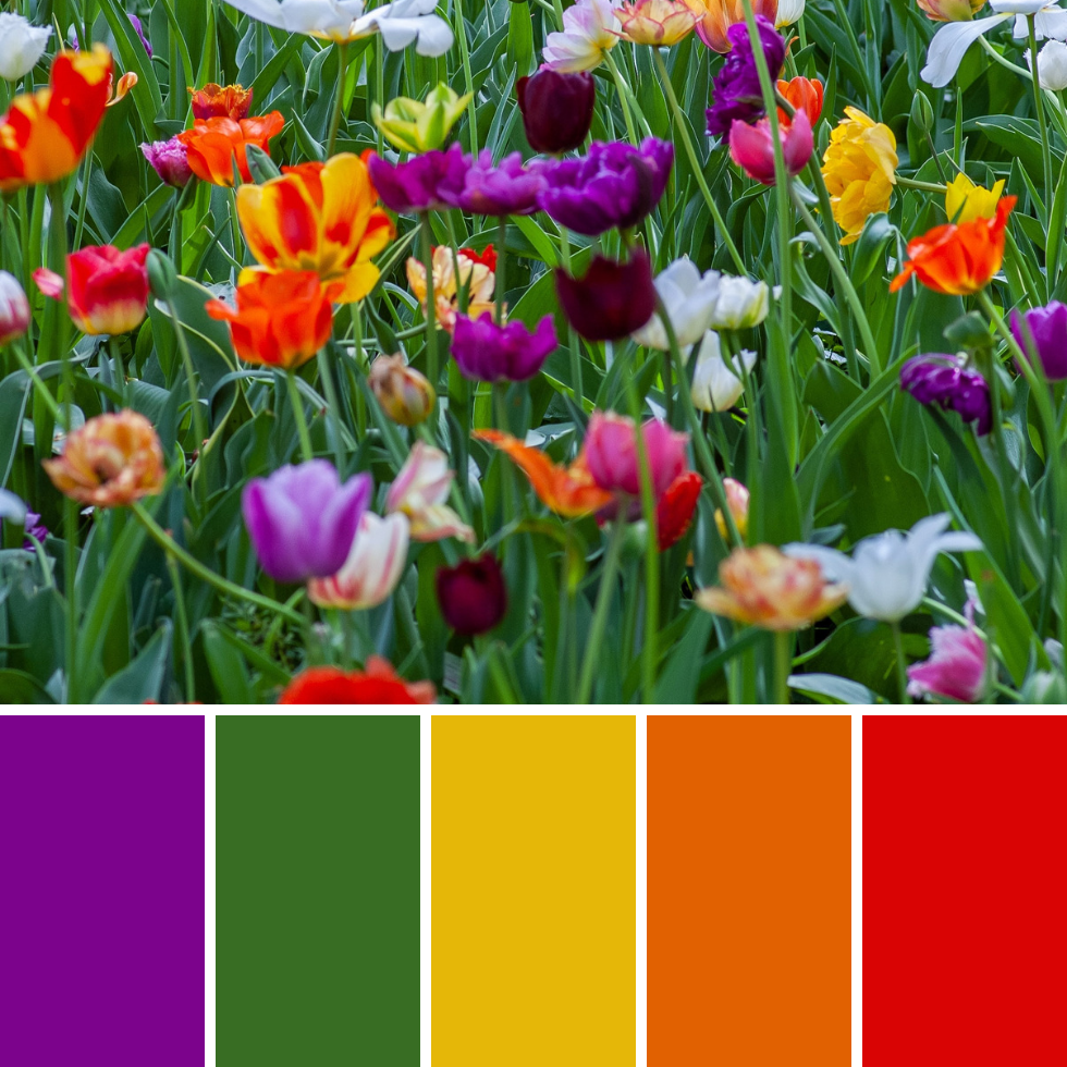 Spring Colour Palettes + Hex Codes
