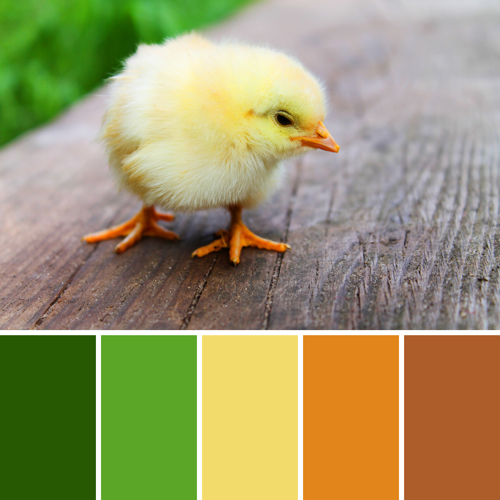 Spring Colour Palettes + Hex Codes 3