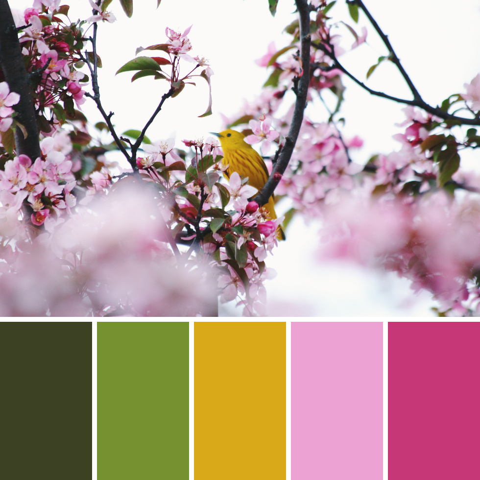 Spring Colour Palettes + Hex Codes 7